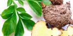 Teufelszunge: Wie Konjak den Appetit natürlich verringert